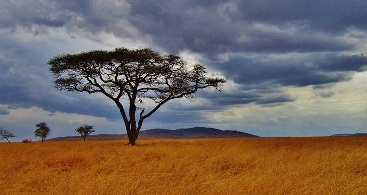 Serengeti and Ngorongoro Crater - Absolute Africa