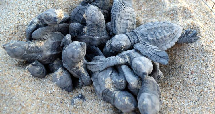 Sea Turtle Camp Adventure - Todos Santos Eco Adventures