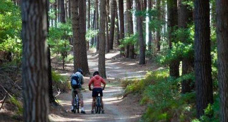 Nelson Great Taste Cycle Trail - Adventure South