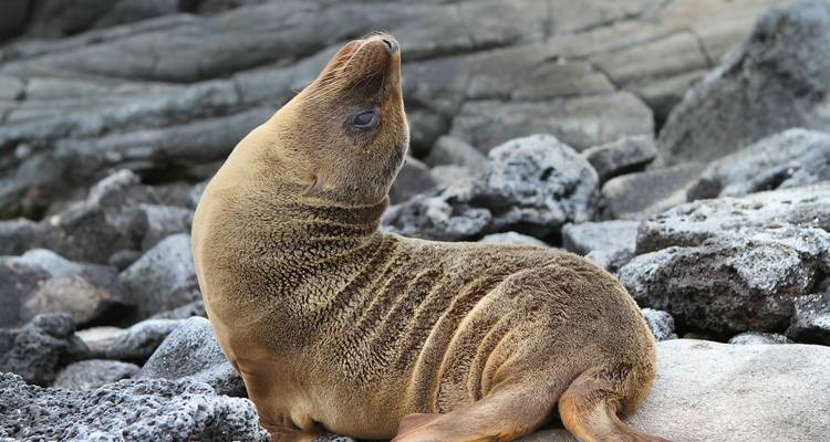Galápagos — South & East Islands aboard the Monserrat - G Adventures