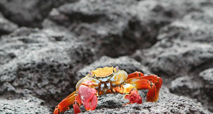 Galápagos — West & Central Islands aboard the Monserrat - G Adventures