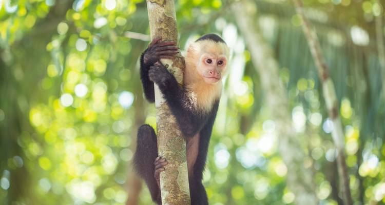 Costa Rica Family Experience - G Adventures