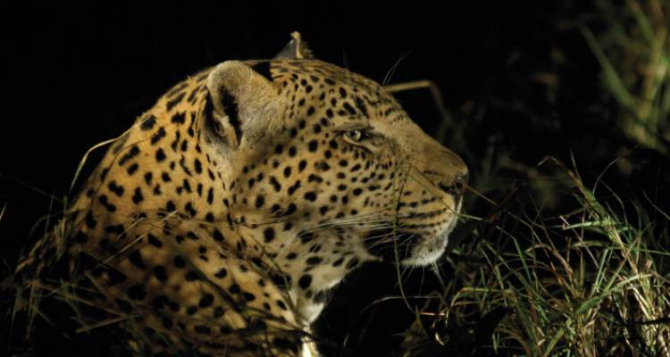 Kruger Experience - Lodge (5 days) - Intrepid Travel