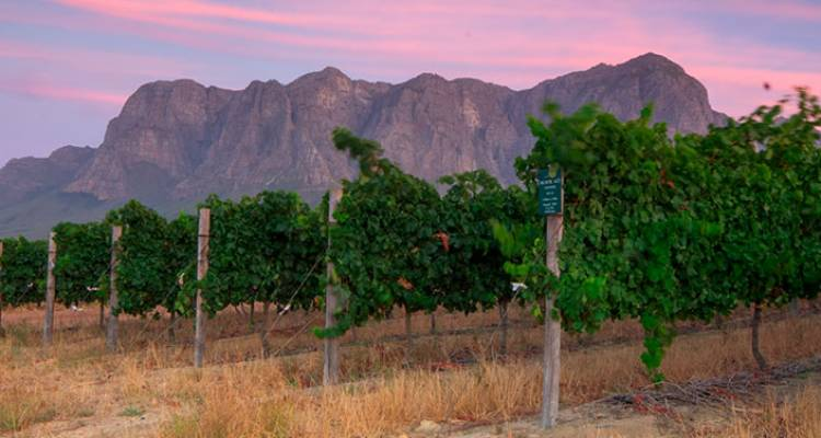 Cape Town and Winelands  - Intrepid Travel