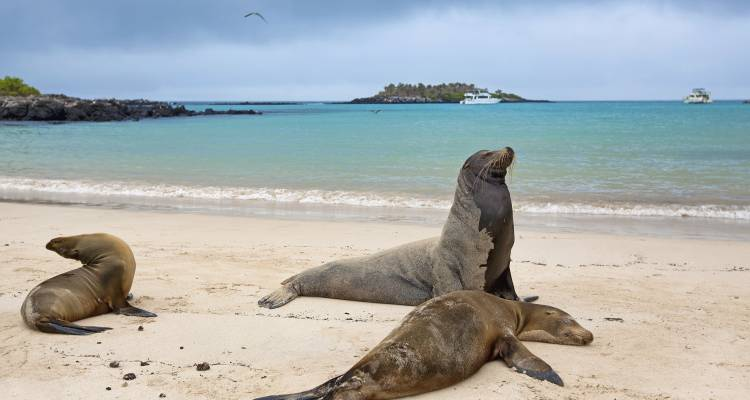 Galapagos Adventure - Northern Islands (Daphne) - Intrepid Travel