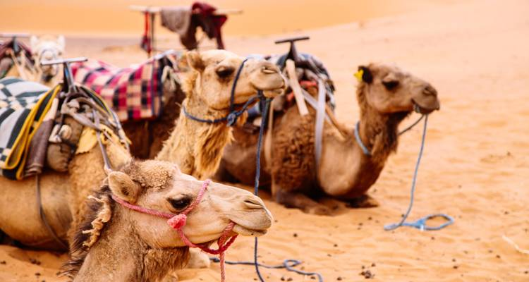 Camels, Kasbahs & Surf Family Tour - 12 Days - Nomadic Tours