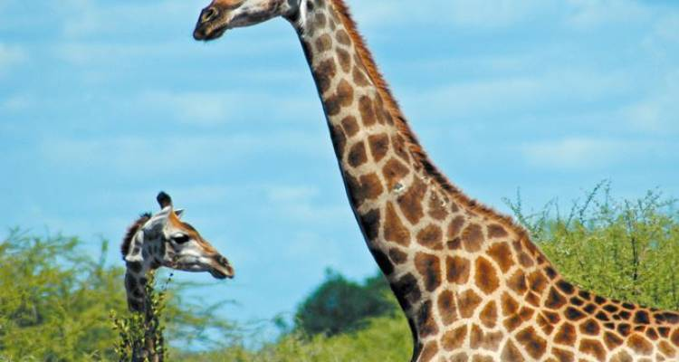 Botswana Adventure - Intrepid Travel
