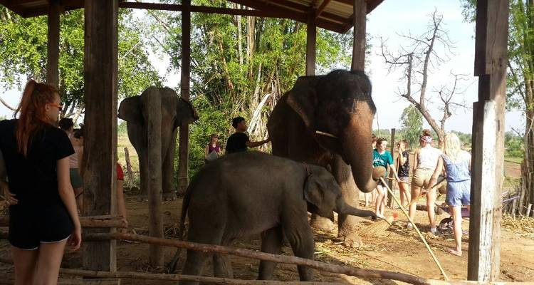 29 Day Elephant Experience in Surin - Thailand - Starfish Adventure