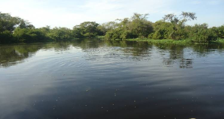 Bolivian Amazon Pampas Adventure (from Rurrenabaque) (3 days) - Bamba Experience