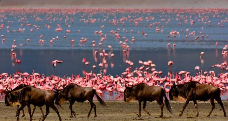 Day Trip - Ngorongoro Crater - Sed Adventures Tours and Safaris