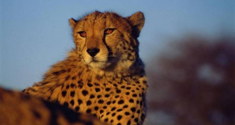 23 Day African Odyssey - Wild Dog Safaris
