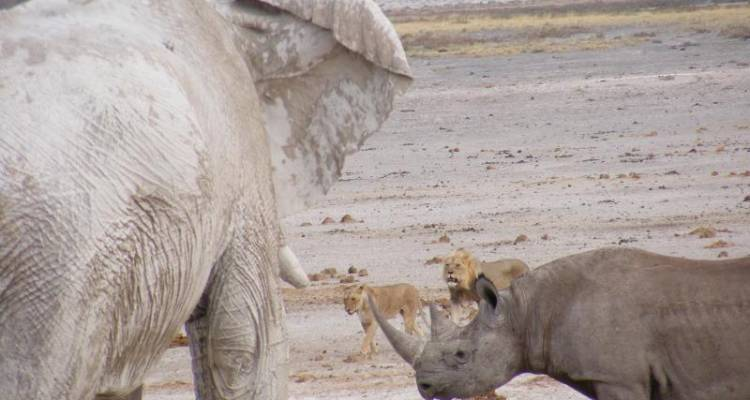 3 Day Etosha - Wild Dog Safaris