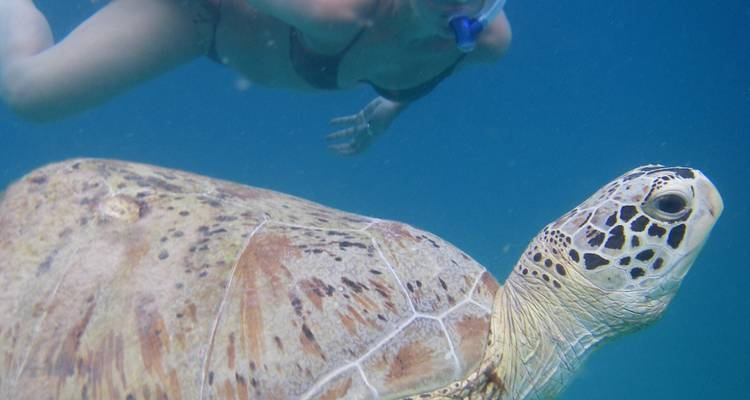 Perhentian Turtle Project - 2 weeks - Fuze Ecoteer Outdoor Adventures