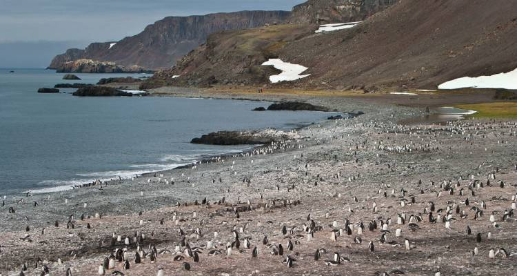 Antarctic Peninsula, Falkland Islands & South Georgia: From Buenos Aires  - Intrepid Travel