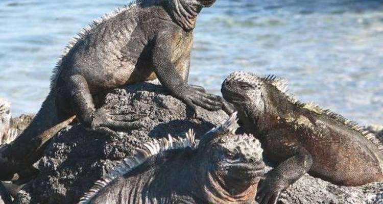 Galapagos Islands on Eden - World Expeditions