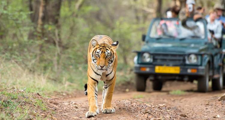 Golden Triangle Tour with Ranthambore - GeTS Holidays