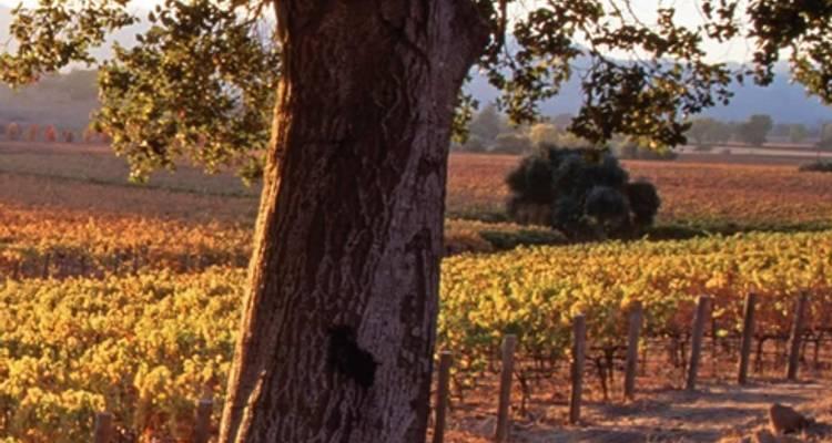 San Francisco and Wine Country Delights Summer - Trafalgar