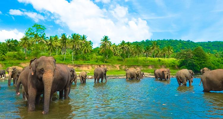 Essential Sri Lanka - Intrepid Travel