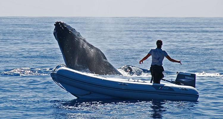 Tonga Whale Encounters - Encounters Travel