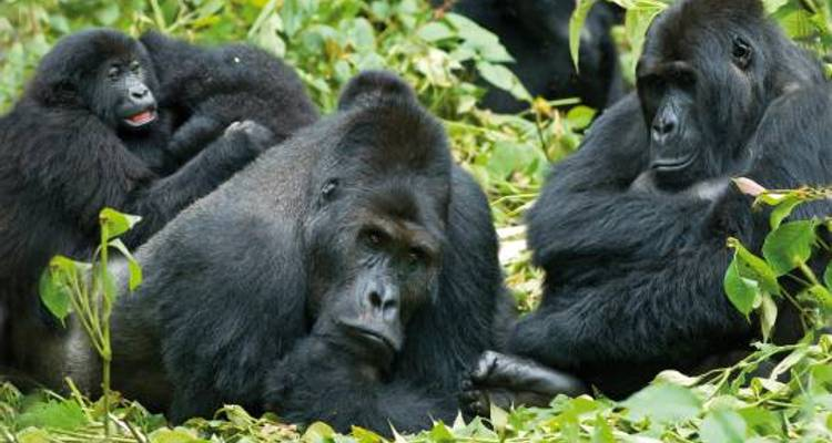 Gorilla Trek and Tanzania - 25 days - On The Go Tours