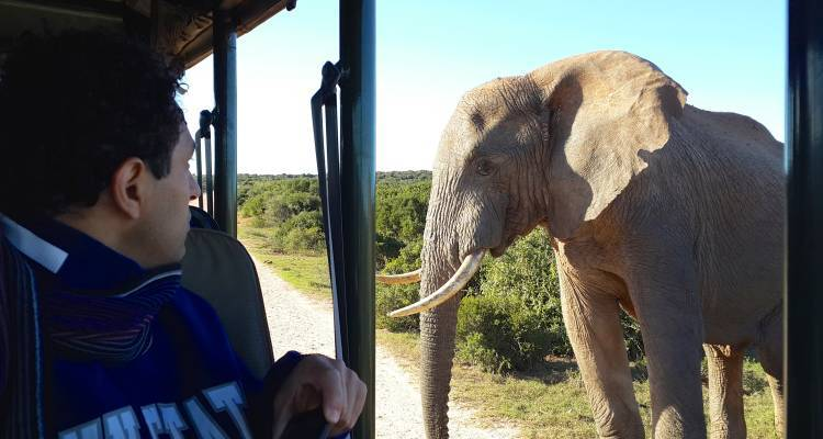 6-Day Garden Route & Addo Adventure Tour - Earthstompers Adventures