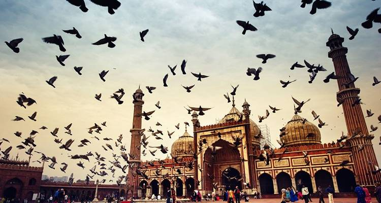 Icons of India: The Taj, Tigers & Beyond with Dubai, Southern India & Varanasi - Globus