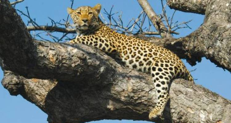 Best of Kenya & Tanzania - 11 days - On The Go Tours