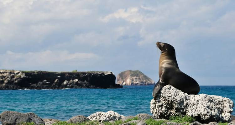 Grand Tour of South America with the Galápagos on board the Santa Cruz II - Monograms