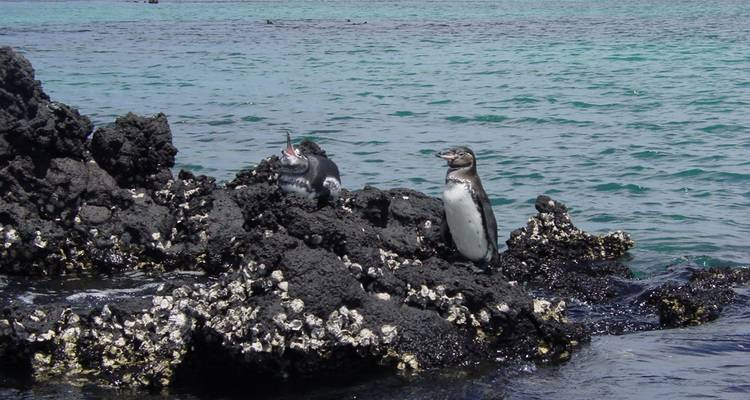 Cruising the Galápagos on board the Santa Cruz II with Peru - Monograms
