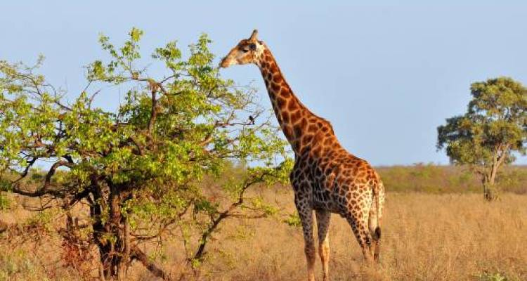 Great African Expedition - 57 days - On The Go Tours