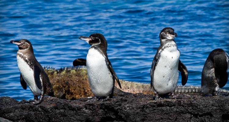 The Best of Galapagos Active Travel 7 Days - Adventure Journeys