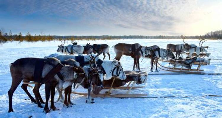 Lapland & the Arctic Circle - 5 Days - On The Go Tours