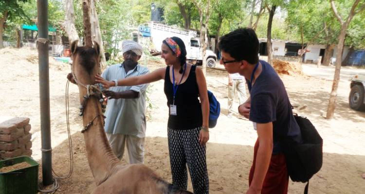 India Voluntour (Jaipur) 14D/13N - Bamba Experience