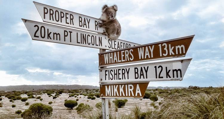 The Best of Port Lincoln & Coffin Bay - Xplore Eyre