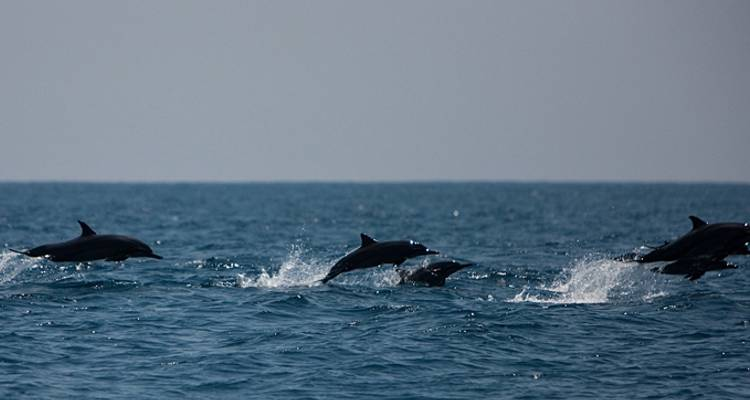 Whale & Dolphin Watching in the Azores - Exodus Travels