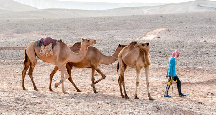 Djibouti's Footsteps of the Afar - Intrepid Travel