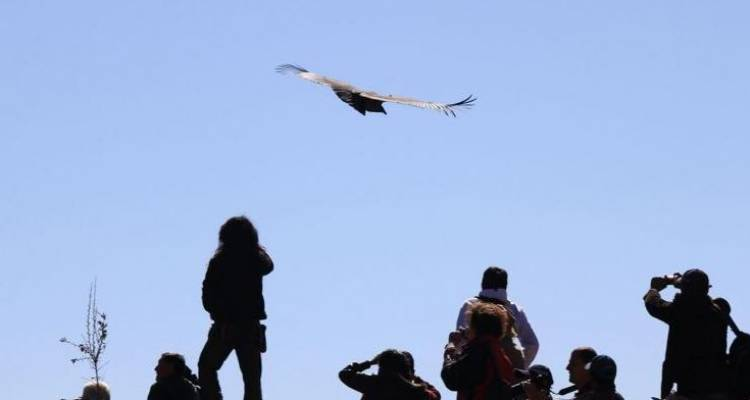 Condor Flight and Lake Titicaca (05 Days & 04 Nights) - Gray Line Peru