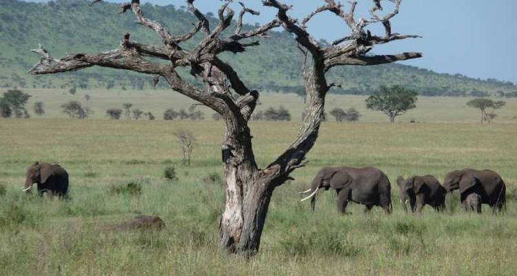 Tanzania The Serengeti & Beyond with Selous (from Arusha to Dar es Salaam) - Globus