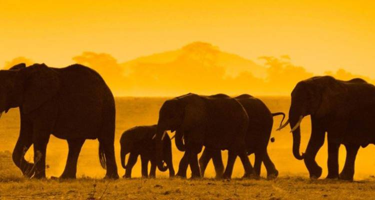Kenya Private Safari with Nairobi, Amboseli National Park Area & Samburu National Reserve Area - Monograms