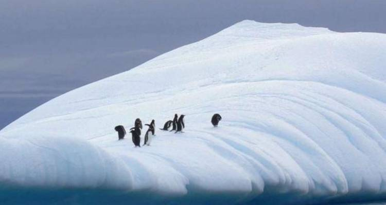 Antarctic Explorer from Ushuaia 11 day - Peregrine Adventures