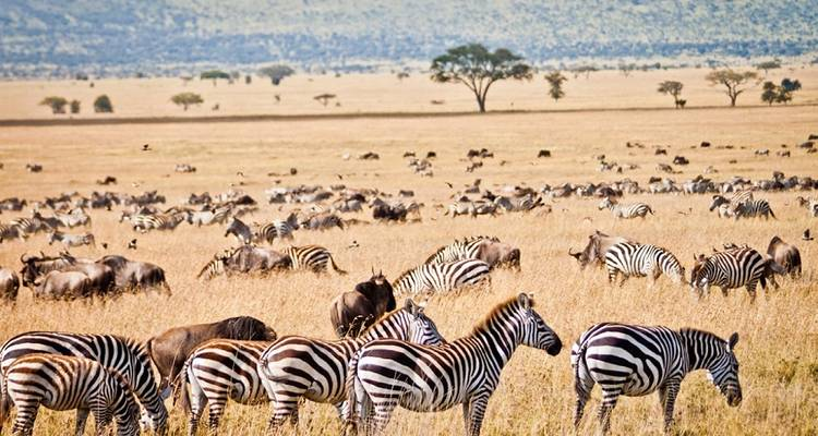 Cape Town to Kenya Accommodated - Acacia Adventure Holidays