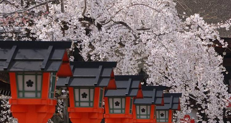 Japan Cherry Blossom Tour - Essence of Spring (from Osaka to Tokyo) - Japan Deluxe Tours
