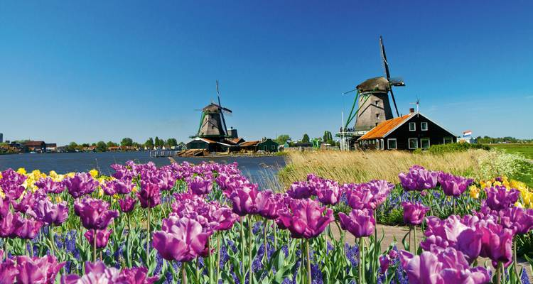 Tulips & Windmills (Antwerp to Amsterdam, 2018) - Uniworld Boutique River Cruise Collection