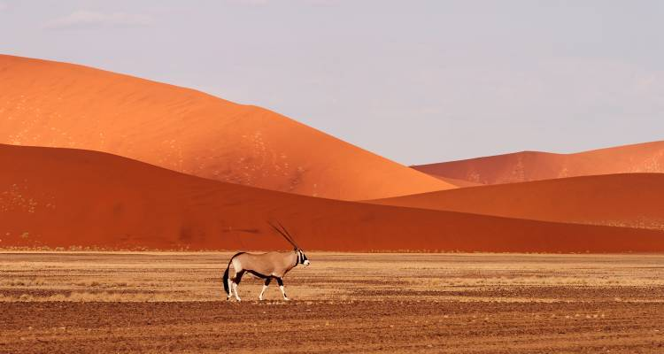 Cape to Namibia - 14 days - On The Go Tours