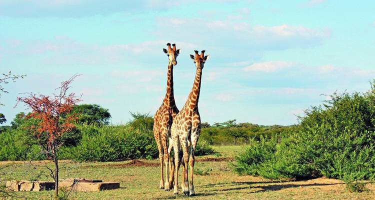 Kruger Victoria Falls  Zanzibar Accommodated - Acacia Adventure Holidays