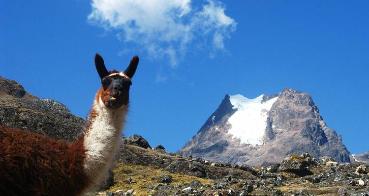 4 Days  Lares Trek  to Machu Picchu  -  Group Service - Valencia Travel Cusco
