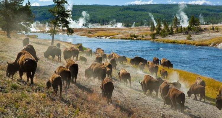 Yellowstone Wildlife Trails (8 destinations) - Grand American Adventures