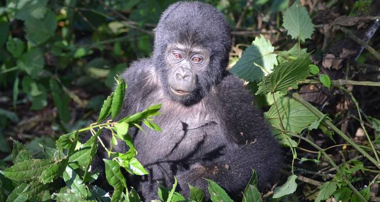 Ocean to Gorillas Accommodated - Acacia Adventure Holidays