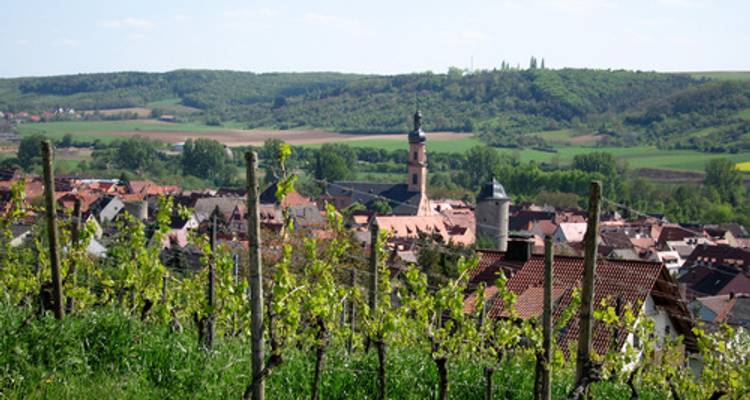 Easy bike & cruise tour on the Main from Aschaffenburg to Bamberg - Bike Planet Tours