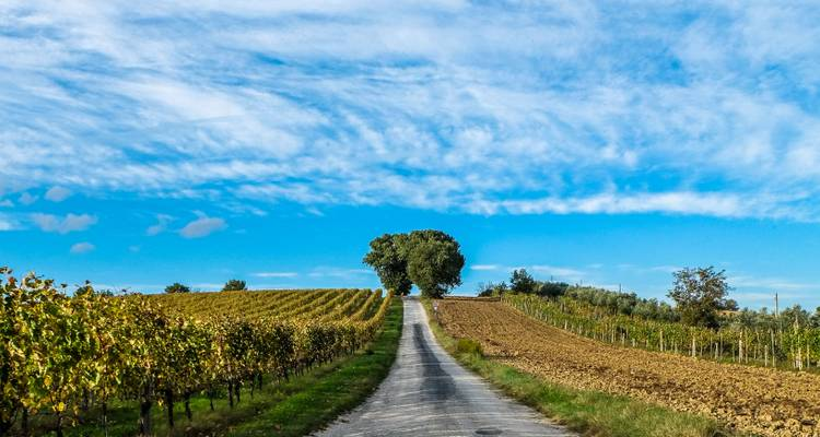 Italy Uncorked: Wine & Cooking in the Heart of the Italian Countryside - The Italian on Tour